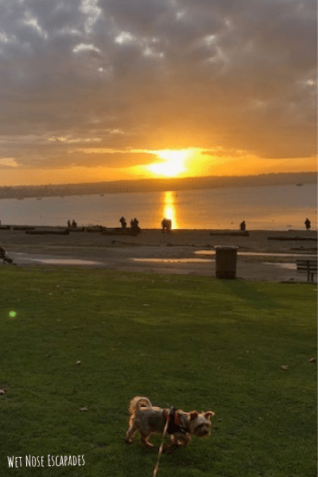 Dog-friendly Beach Avenue_English Bay_Places to Take Your Dog in Vancouver, B.C.