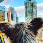 Fun Places to Take Your Dog in Vancouver, B.C.