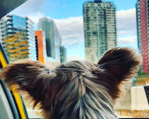 Places to Take Your Dog in Vancouver, B.C.