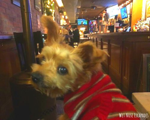 where to take your dog in hoboken, new jersey