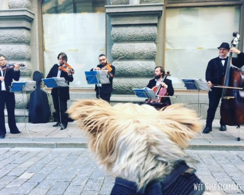 Things to do with Your dog-friendly gamla stan_Dog in Stockholm, Sweden