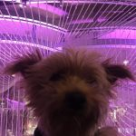 Is Las Vegas, NV Dog-Friendly? A Guide to Taking Your Dog to Vegas