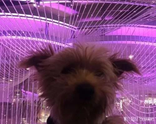 Is Las Vegas, NV Dog-Friendly?