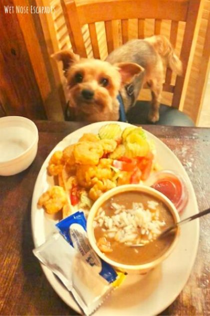 daisy dukes_Dog-Friendly Restaurants in New Orleans