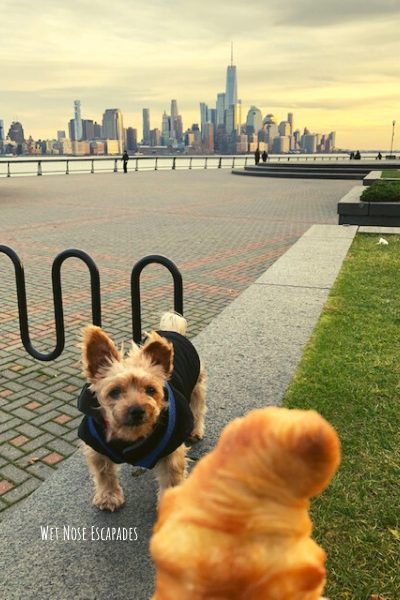 dog-friendly places to take your dog in hoboken, new jersey