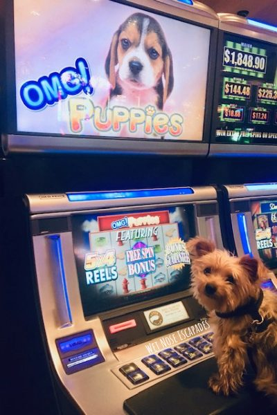can dogs go inside casinos in Las Vegas?