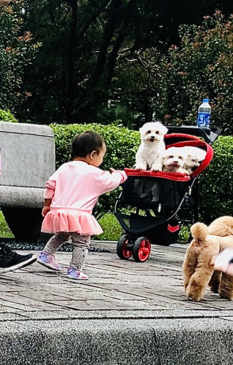 Introducing a baby or child to your dog