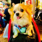 Dogs of Taipei, Taiwan: Part 2 (VIDEO)