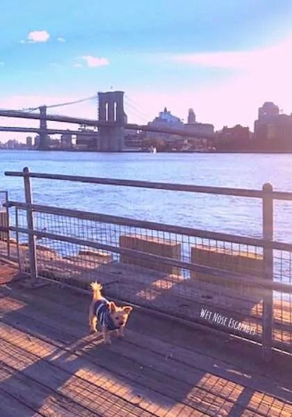 Dog at Brooklyn Bridge, Lower Manhattan