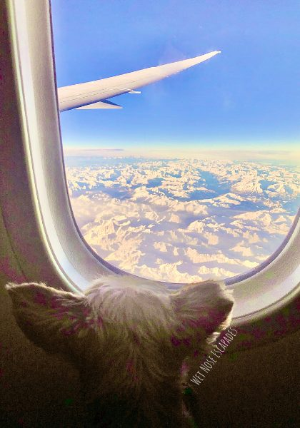 Flying to Belgium from United States with a Dog
