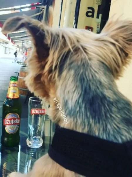 Dog Friendly Bars in Zagreb