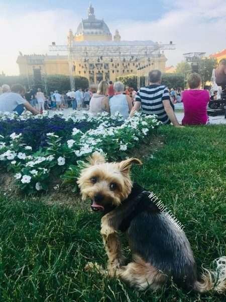 Dog Friendly Parks Zagreb Croatia