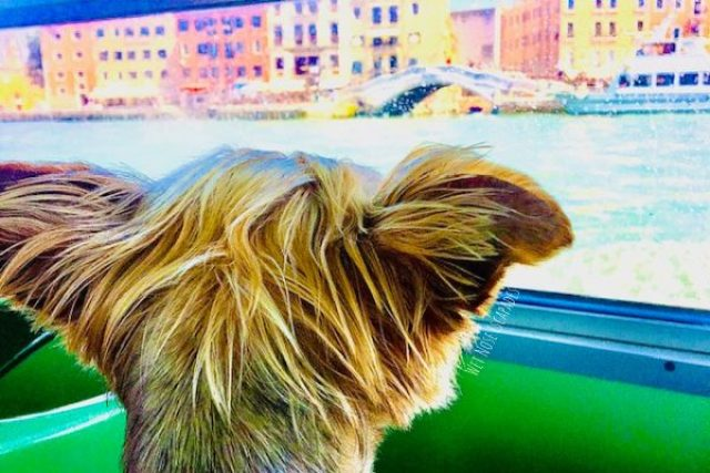are dogs allowed on vaporettos in Venice?