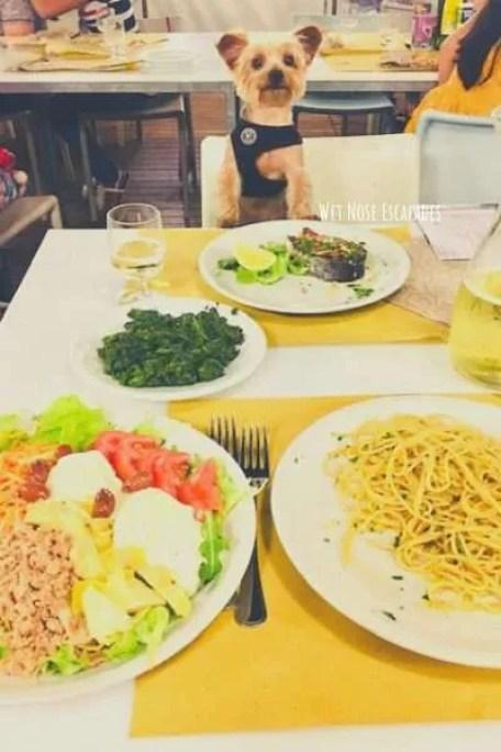 dog-friendly venetian restaurants, venice italy