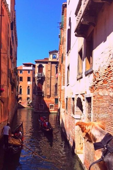 Is Venice, Italy Dog-Friendly? A Guide to Traveling in Venice with a Dog