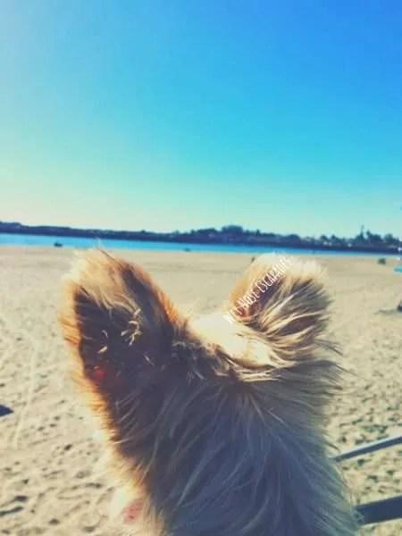 dog friendly beaches in Santa Cruz, California