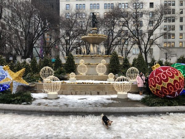 Yorkie dog at New York Plaza Hotel in the Winter
