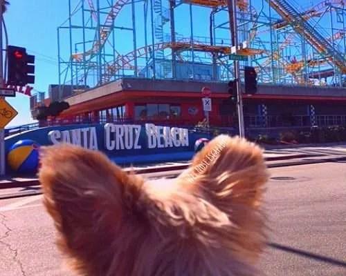 Are dogs allowed at Santa Cruz Beach Boardwalk?