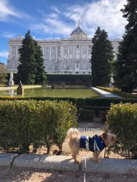 Yorkie Dog at Sabatini Gardens in Royal Palace Madrid