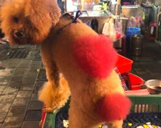Why You Should NOT Dye Your Dog's Hair
