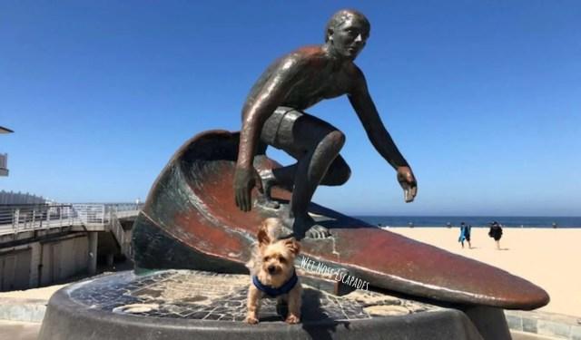 dog-friendly Hermosa Beach, dogs allowed on the beach?
