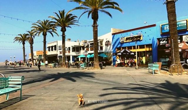 dog friendly Pier Avenue Hermosa Beach