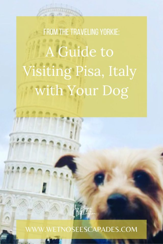 Day Trip to Pisa, Italy with Your Dog