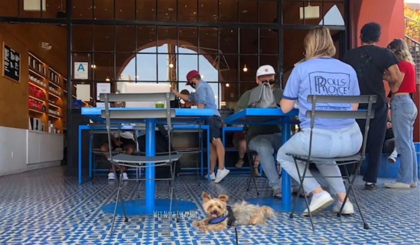yorkie dog in silver lake los angeles, Intelligentsia coffee shop