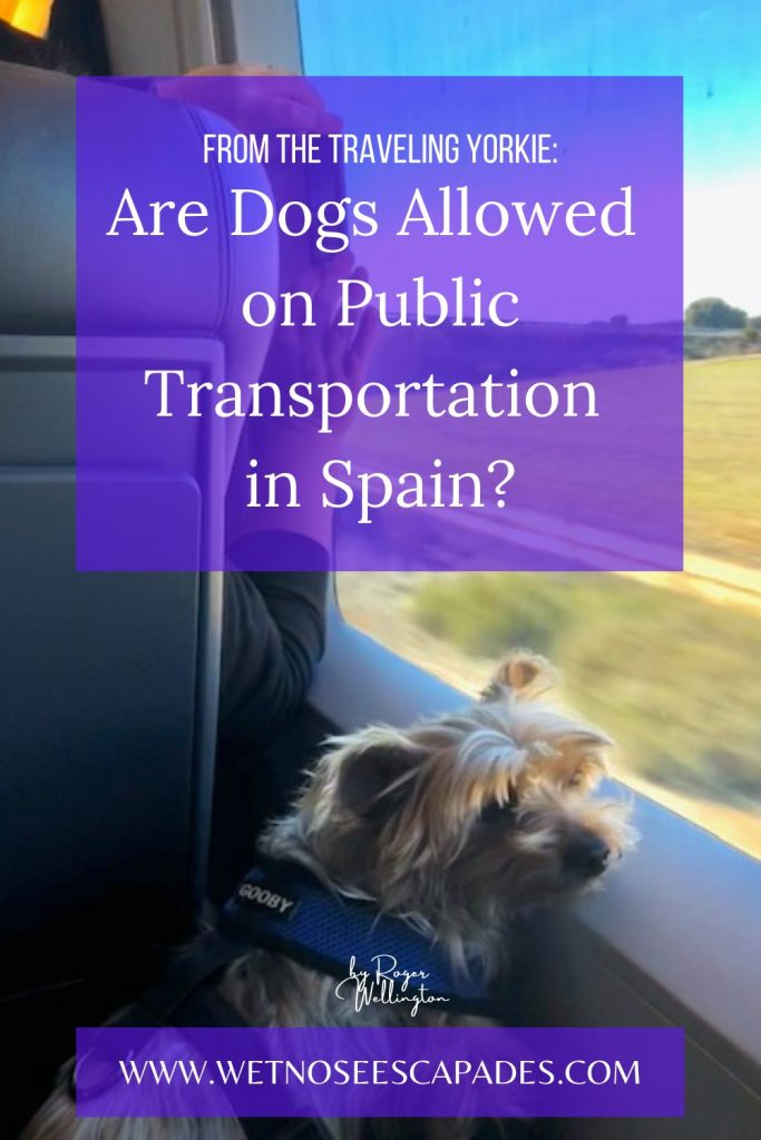 Are Dogs Allowed on Public Transportation in Spain?