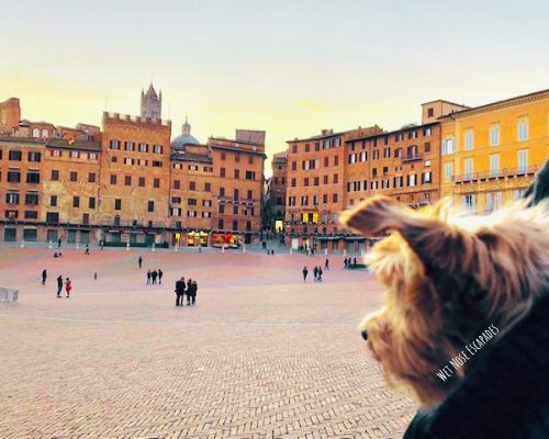 Day Trip to Siena, Italy with a Dog