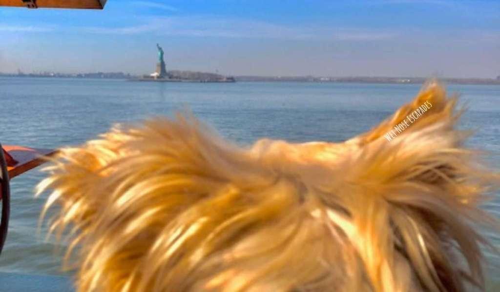 Yorkie dog on Staten Island Ferry