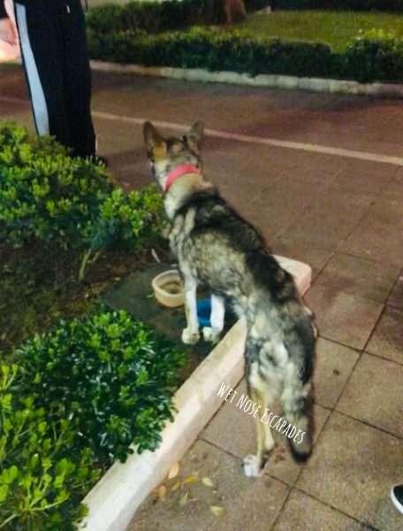 Stray Dog in Croatia