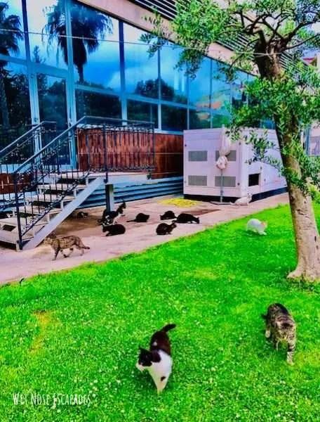 Feral cats in Dubrovnik, Croatia