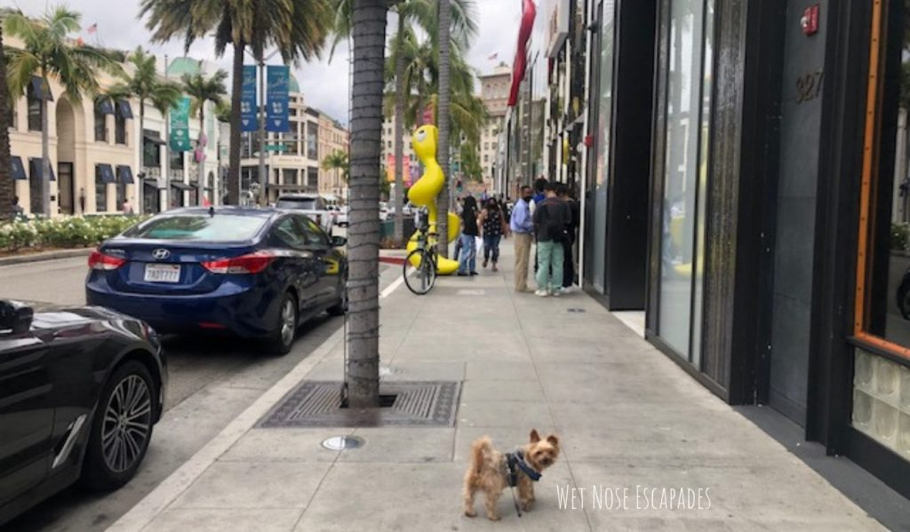 Yorkie dog on Rodeo Drive, Beverly Hills