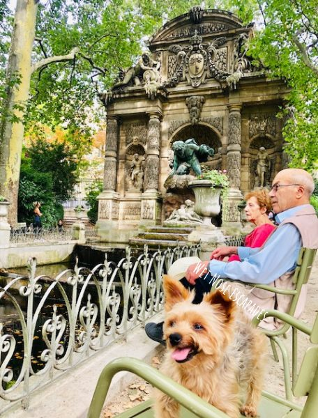 Yorkie dog at the park in Paris