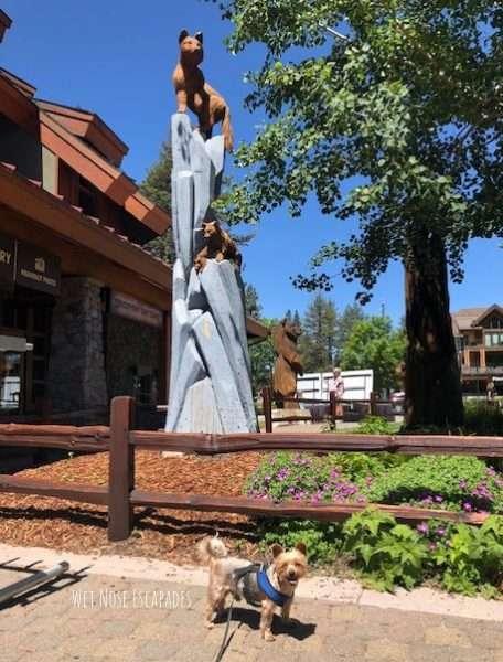 dog friendly heavenly village in south lake tahoe