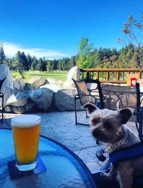 dog friendly breweries south lake tahoe