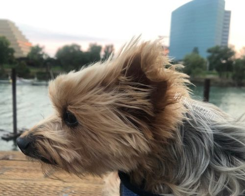 10 Dog-Friendly Things to do in Sacramento, CA