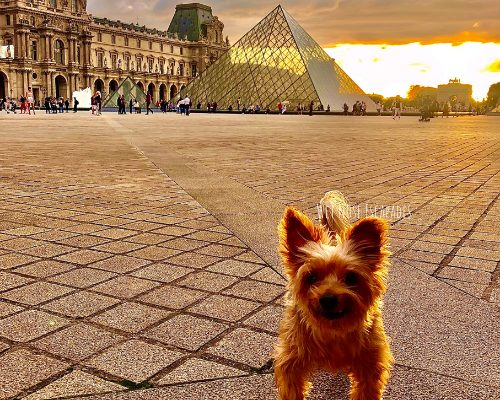Taking Your Dog to France_Yorkie Dog at The Louvre