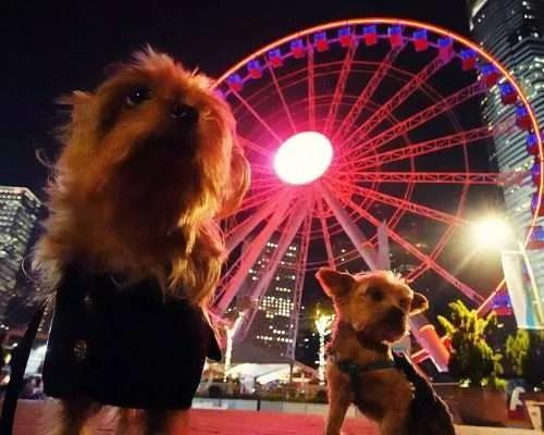 Dog Friendly Hong Kong: Two Yorkies at Central Waterfront