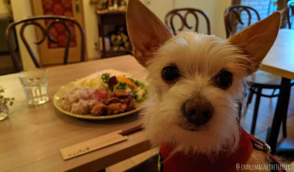 dog friendly restaurants Tokyo