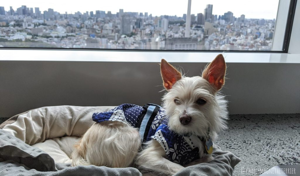 dog living in Tokyo apartment