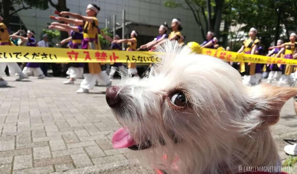 dog living in Tokyo