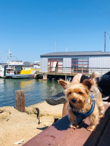 dog friendly boats sausalito
