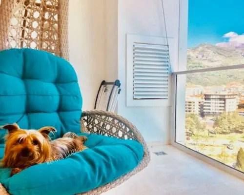 dog friendly montenegro, yorkie traveler