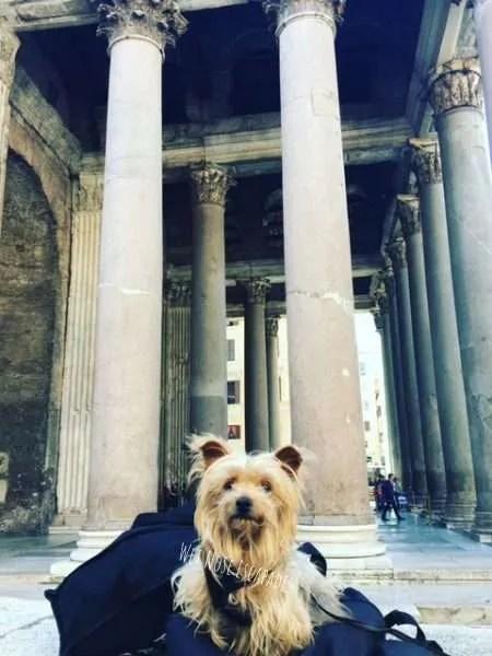 dog friendly pantheon rome italy