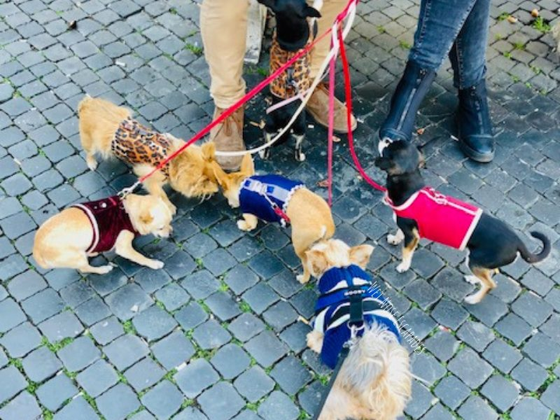 dogs in rome, italy