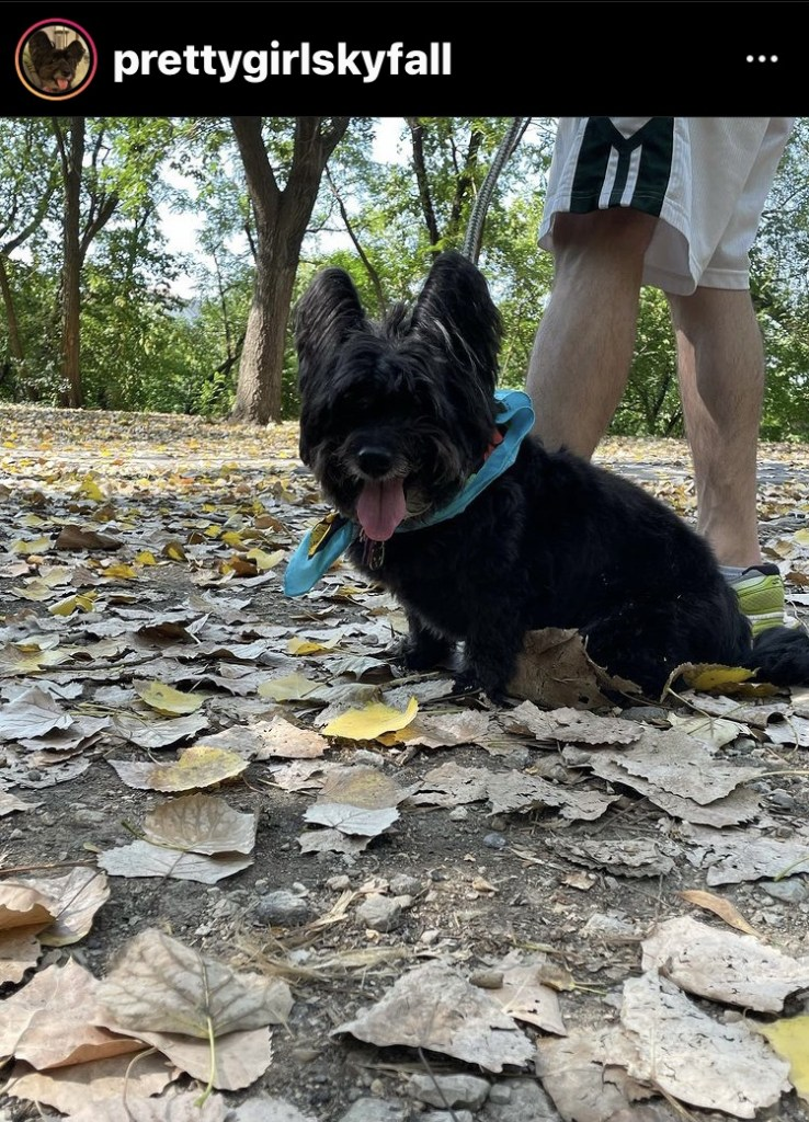 dog friendly parks in chicago