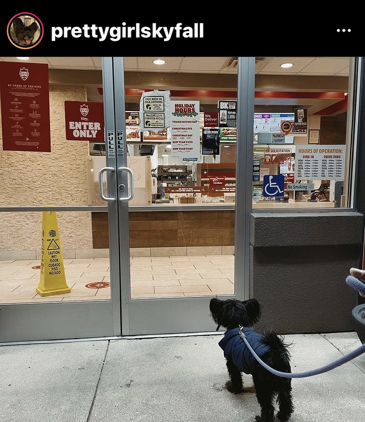 Dog-Friendly Chicago: An Interview with Sky, the Chicagoan Terrier