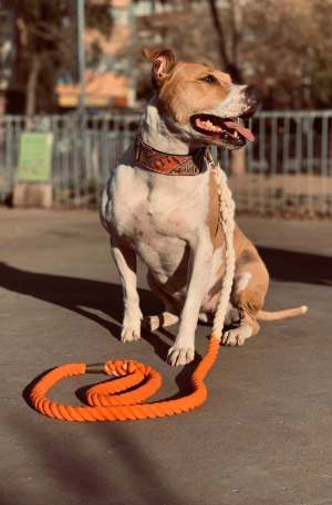 Correa WeTop Dogs Modelo Liathepit Salmón 100% Algodón